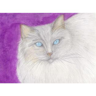 Cat on Purple Background