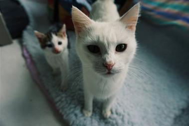 Copy of Cat Family.jpg
