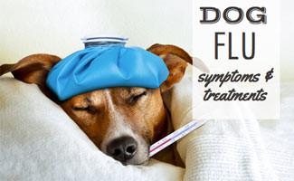 Canine Flu and Homeopathy