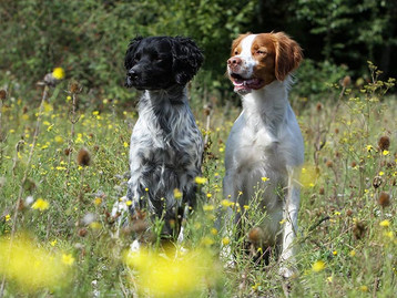 Lyme Disease and Homeopathy for your pets