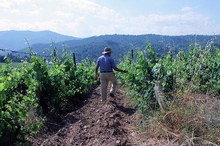 godello guitian valdeorras viñedo