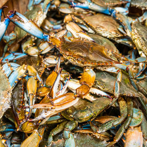 Order From These Chesapeake Crab Houses To Help Keep The Industry Afloat