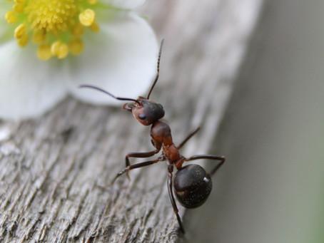 Lições em comum entre a Relações Públicas e as formigas