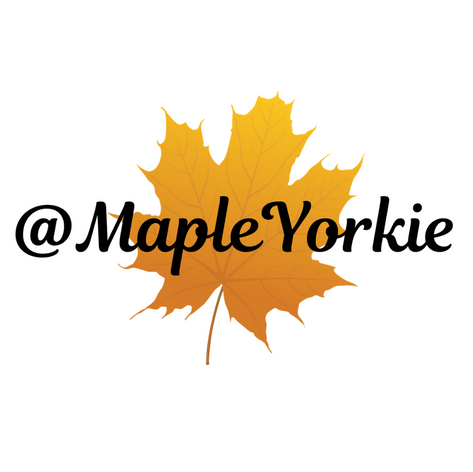 Maple Yorkie