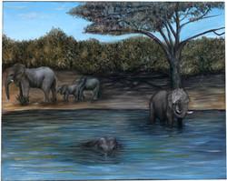 Elephants in the Water
