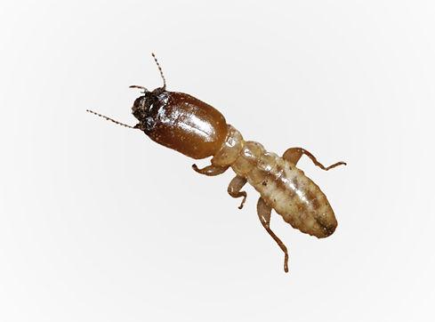 fumigacion-termitas-control-de-plagas-we