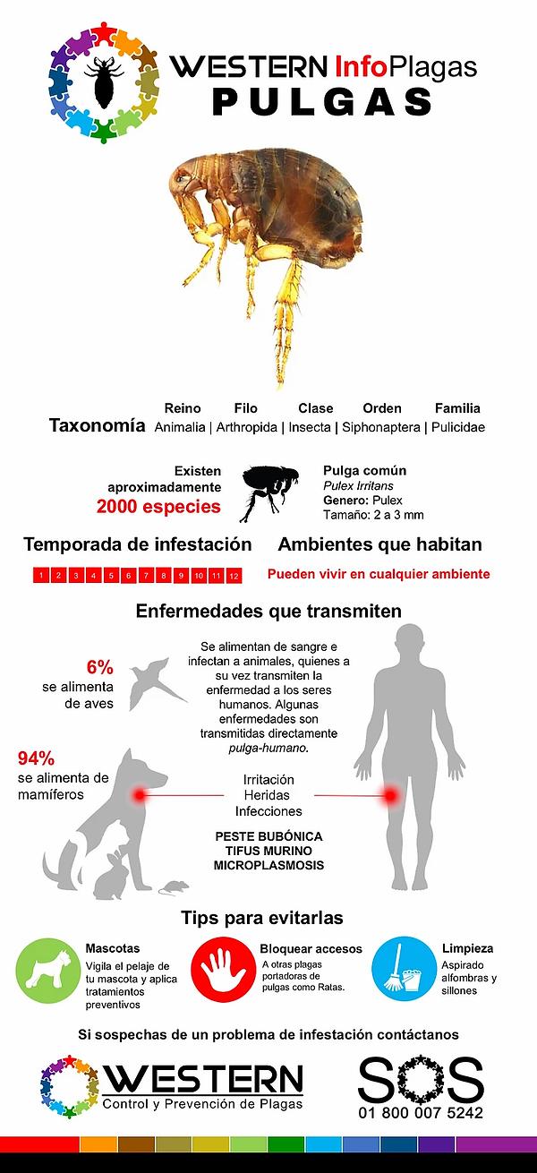 fumigacion-control-eliminacion-de-pulgas
