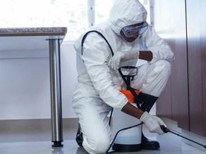 Prevención de plagas en el hogar