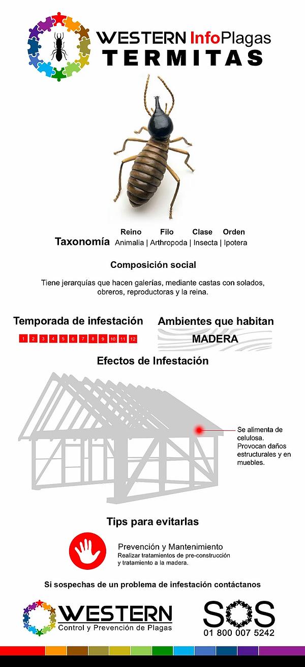 termitas-control-de-plagas-fumigacion-we