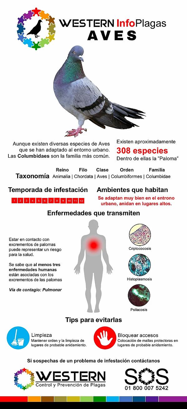 control-de-plagas-aves-control-de-plagas