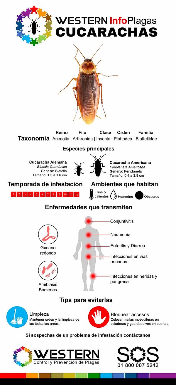 fumigacion-y-control-de-cucarachas-elimi