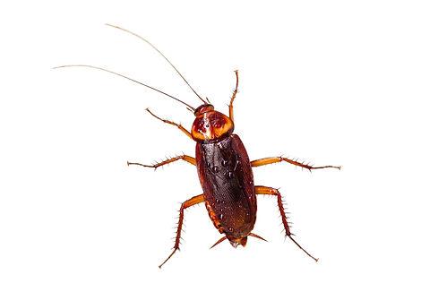 control-de-cucarachas-prevencion-de-plag