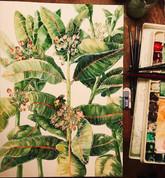 """Asclepias syriaca """"Common Milkweed"""""""