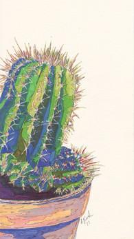 Echinocactus grunsonii