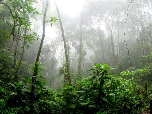 """""""La Amazonia es nuestra"""", afirma Bolsonaro en acto militar"""