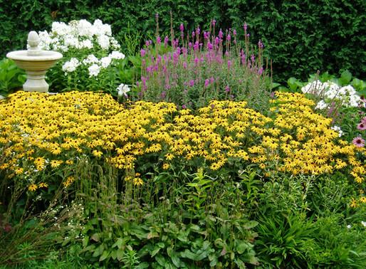 To Do in the Garden in September