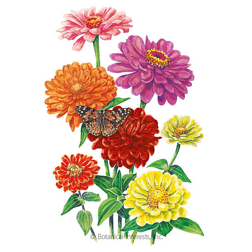 California Giants Zinnia Seeds