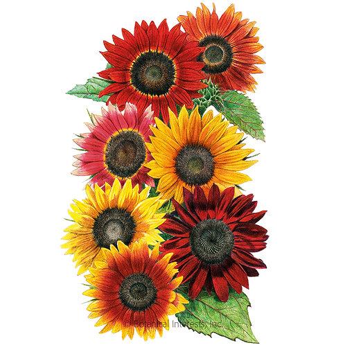 Heirloom Beauties Sunflower Seeds