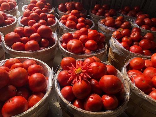 Tomatoes (/lb)