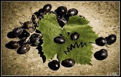 """""""Les raisins de la colère"""""""