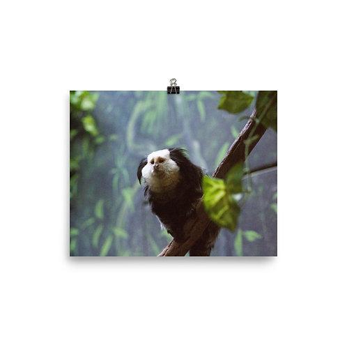 Monkey Branch