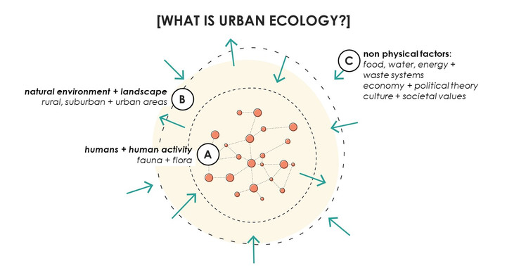 Urban ecology & ecosystems