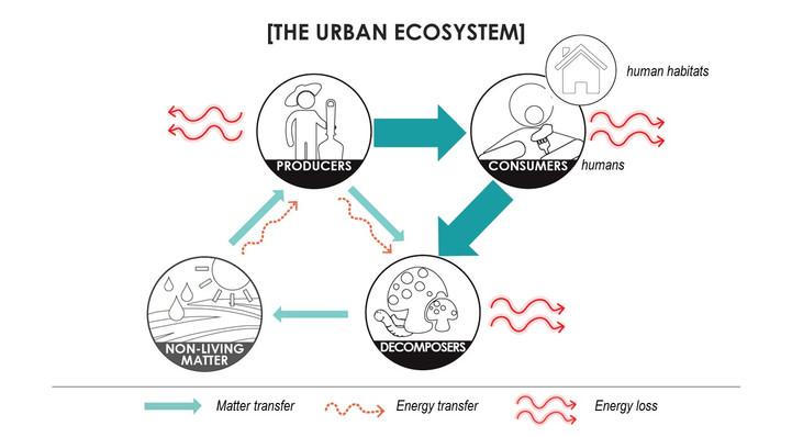 Urban ecosystems flows
