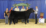 Scholtz Farm: Champion Angus Heifer: 4th Over All: MN State Fair