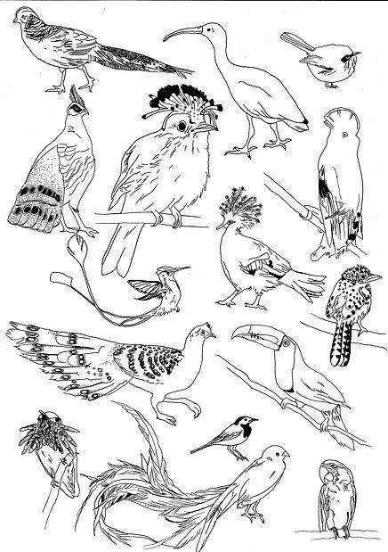 oiseaux licence.jpg