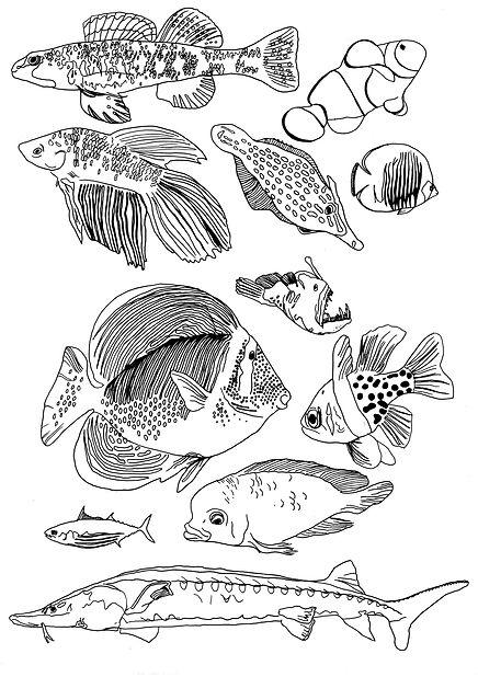 poissons licence.jpg