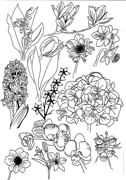 fleurs licence.jpg