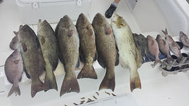 Game Fish Fishing Charters