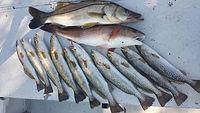 Charter Fishing, scalloping Charters hernando county, Inshore Fishing Hernando Beach, Charter Boats Spring Hill