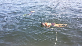 Saltyds Fishing scalloping hernando beach