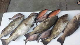 Fishing Charters Deepsea fishing