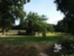 A la rencontre du chêne à Guillotin
