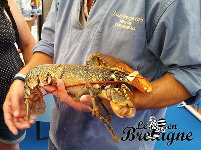 Douceurs du terroir : le homard bleu Breton