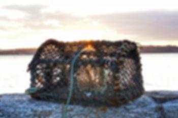 lobster-2813428_1280.jpg