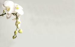 Orchid_edited_edited