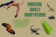 amazing insect adaptations page 1 (1).jp