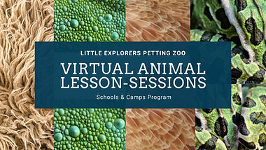 Mini Animal Lessons  (2).jpg