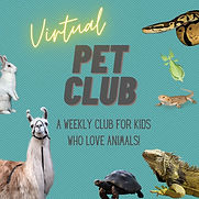 Virtual Pet Club instagram post 1.jpg
