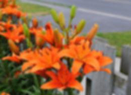 Lilies_edited.jpg