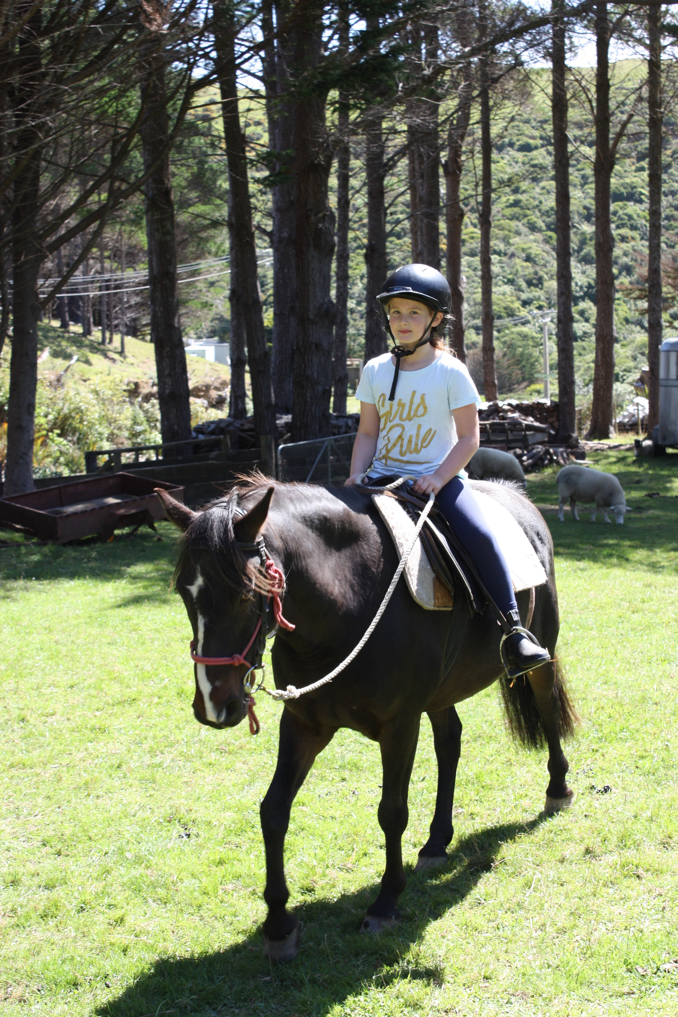 Horse Riding and Care