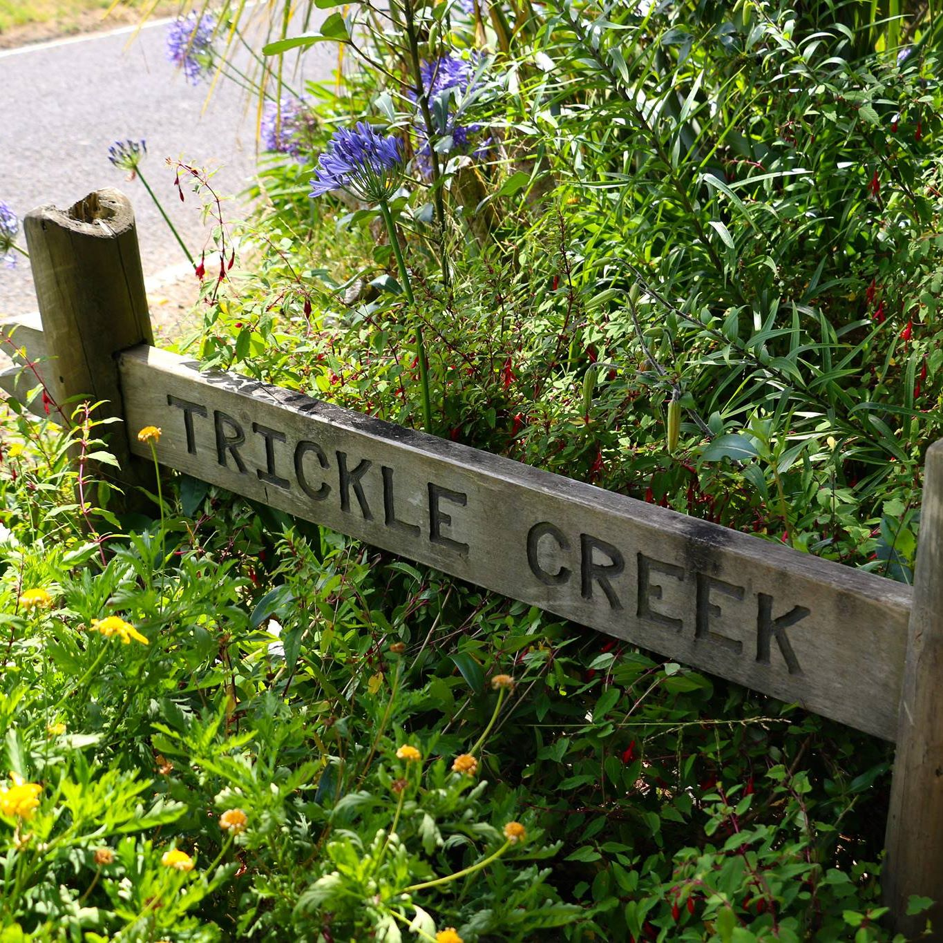 Trickle Creek