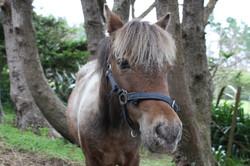 Billy the Pony