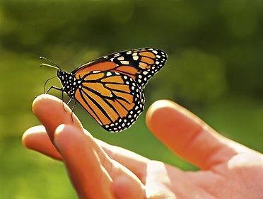 97534093_lo Bild Schmetterling Flyer.jpg