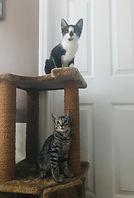 Oreo and Link.JPEG
