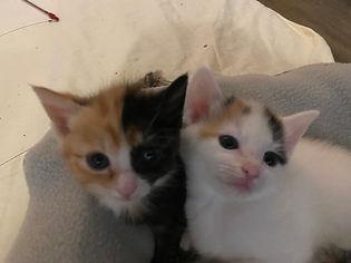 Priscilla and Tressa.jpg