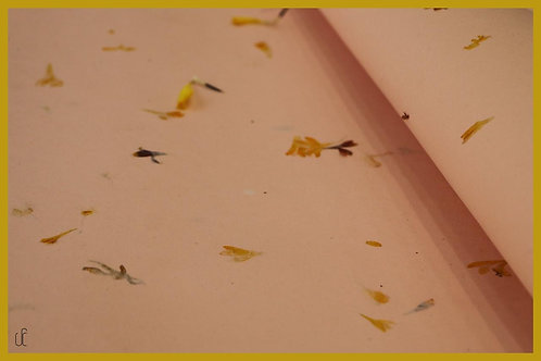 Handmade Flower Pressed Paper (Set of 5 Sheet)
